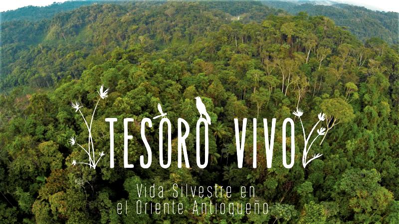 Photo of Disfruta del documental «TESORO VIVO» vida silvestre en el Oriente Antioqueño