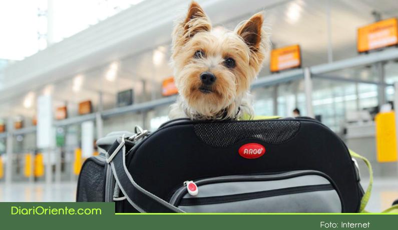 Photo of Por regulación de la Aerocivil ahora será más fácil viajar con tu mascota