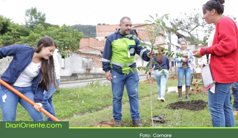 Photo of En el Oriente Antioqueño conmemoraron el día del árbol sembrando 4.800 árboles