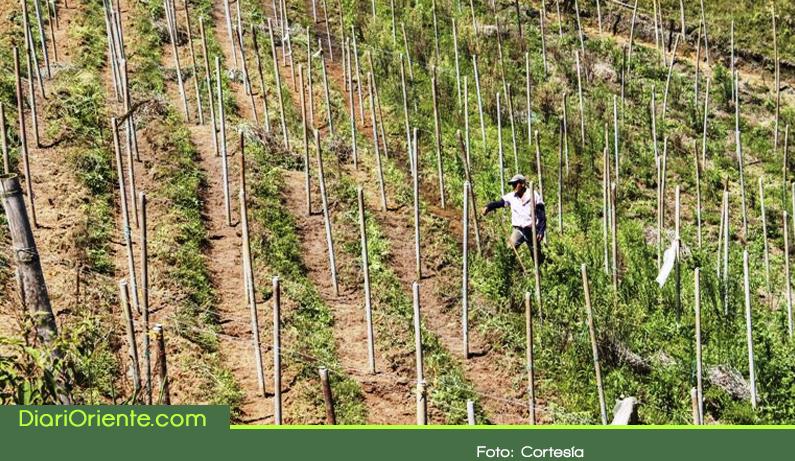 Photo of Se entregan 67 mil envaraderas plásticas, que han evitarán la tala anual de 150 mil árboles