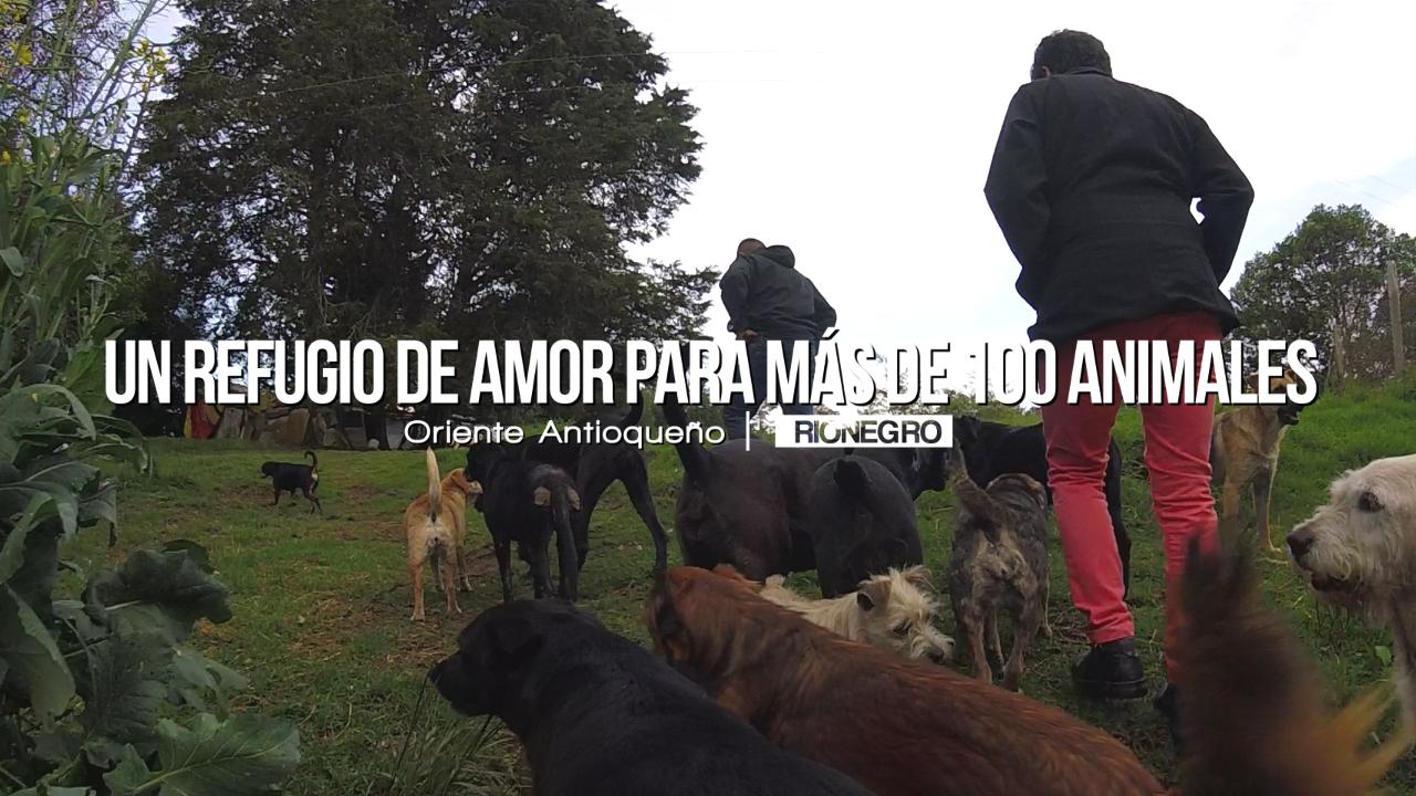 Photo of Un refugio de amor para más de 100 perros y gatos