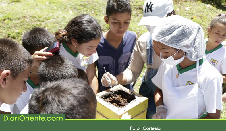 Photo of Jóvenes de 60 instituciones del Oriente se capacitan en conservación de las abejas