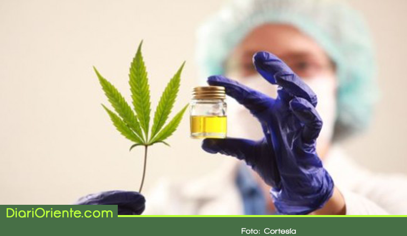 Photo of Empresa de cannabis medicinal en el Oriente entraría en funcionamiento a final de año