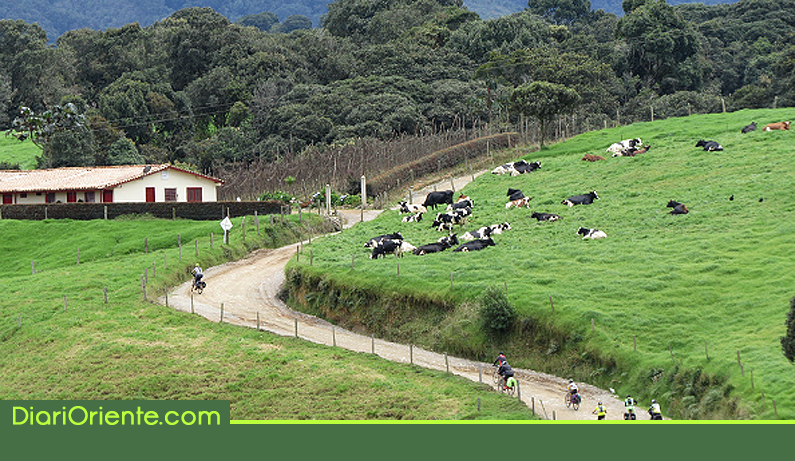 Photo of El Oriente Antioqueño se sigue posicionando como una de las principales cuencas lecheras de Colombia