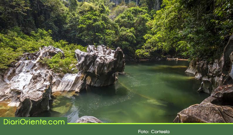 Photo of Ahora el Oriente Antioqueño cuenta con 15.900 nuevas hectáreas protegidas
