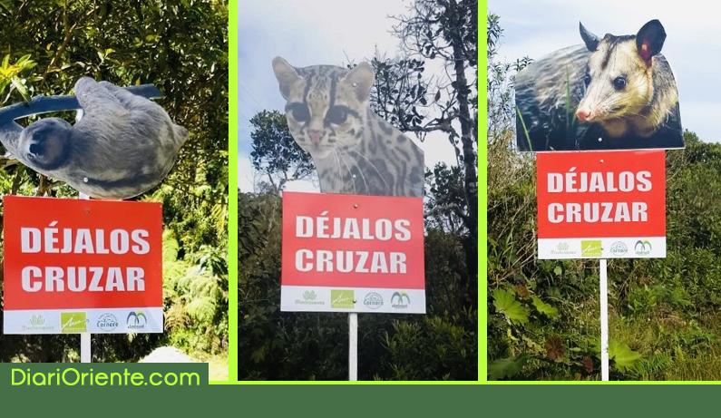 Photo of Campaña para evitar más animales atropellados en las vías del Oriente Antioqueño