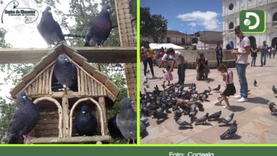 Photo of Palomas del Centro Histórico de Rionegro, una vida nueva