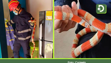 Photo of Serpiente en peligro de extinción, fue encontrada en una vivienda de Guarne.