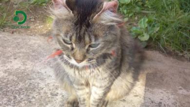 Photo of Apareció «Niña» la gata hurtada en la mañana de ayer