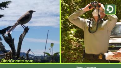 Photo of Antioquia se unió al día mundial del avistamiento de pájaros.