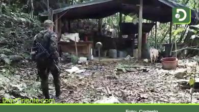 Photo of Destruyen laboratorio de cocaína en el municipio de San Luis