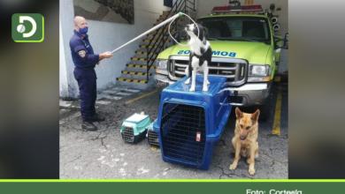 Photo of Bomberos Rionegro reciben equipos para rescate y control de animales.