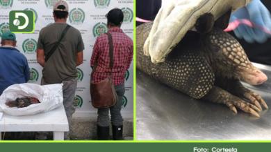 Photo of Capturan a tres personas por cazar armadillos en Guarne