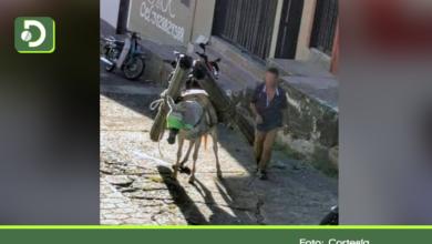 Photo of Video:  Denuncian caso de maltrato animal contra una mula en San Francisco