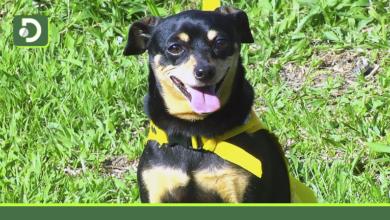 Photo of ¿Ya vacunaste a tu mascota contra la rabia? Este sábado jornada de vacunación gratuita en Rionegro