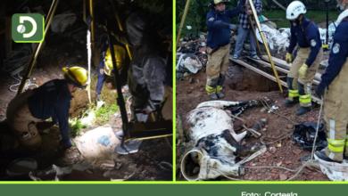 Photo of Rionegro: Rescatan toro que cayó a un hueco de una construcción en la vereda Fontibón