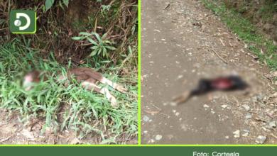 Photo of Hallan dos cabras decapitadas tras supuesto ritual en zona rural de La Ceja