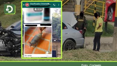 Photo of Rionegro: rescatan armadillo que estaba siendo vendido por un grupo de WhatsApp