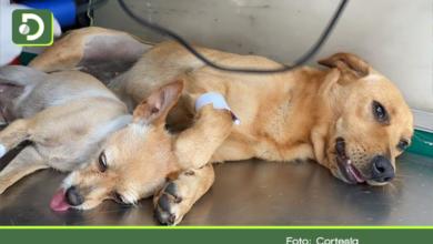 Photo of 'Lulu' y 'Cony', entre las 210 mascotas esterilizadas de manera gratuita en Marinilla