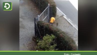 Photo of El Retiro: En vídeo quedó evidenciado el maltrato de un hombre contra un cachorro