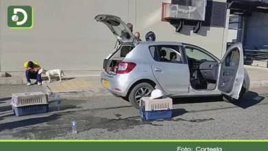 Photo of Rionegro: Dos perros mueren asfixiados tras quedar encerrados al interior de un vehículo