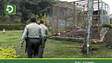 Photo of San Rafael: Rescatan 66 aves silvestres que se encontraban en cautiverio en una finca