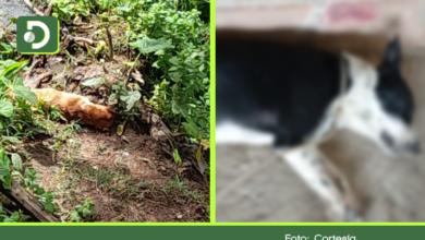 Photo of Investigan el envenenamiento masivo de perros en Rionegro y San Vicente Ferrer