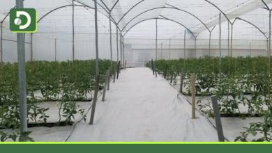 Photo of En El Carmen, inauguraron invernadero de alta tecnología que busca beneficiar a los productores locales.