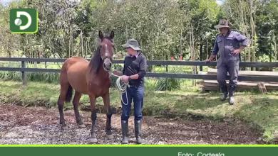 """Photo of Rescatan a caballo que era maltratado en Marinilla: """"Olafo"""" ya disfruta de su nuevo hogar"""