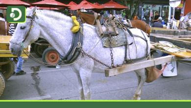 Photo of Aprueban ley: vehículos de tracción animal quedarán prohibidos en todo el país