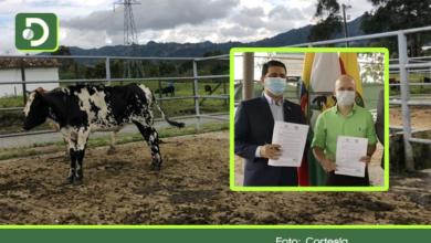 Photo of En La Ceja, estará el primer centro de negocios ganadero del departamento