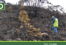 Photo of Según autoridades, incendio no afectó el ecosistema del Páramo de Sonsón