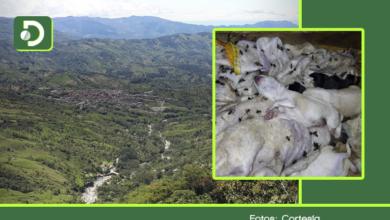 Photo of Dos perros y sus cachorros murieron tras ser atacados por avispas en Cocorná