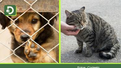 Photo of Marinilla: este sábado participe en jornada de adopción: 54 perros y un gato esperan un hogar