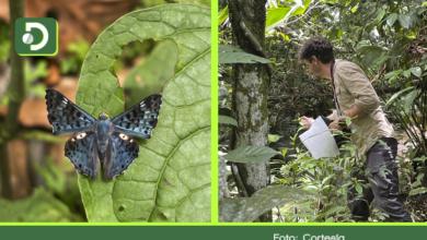 Photo of Colombia, el país de las mariposas: el Oriente Antioqueño tendrá su primera guía