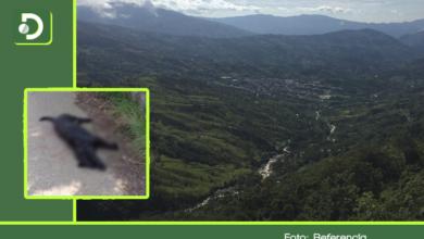 Photo of Hombres armados nos robaron y, además, envenenaron a cinco perros: dicen en Cocorná
