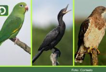 Photo of Nuevamente Colombia es campeón mundial de avistamiento de aves