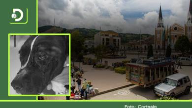 Photo of Una perrita fue atacada a machete en Abejorral: piden ayuda para su tratamiento.